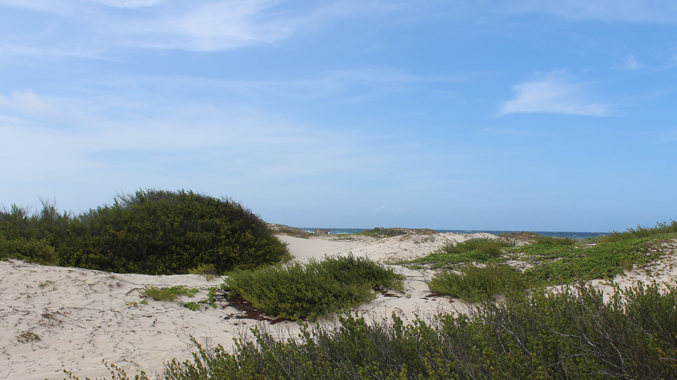boca-grandi-beach-in-aruba