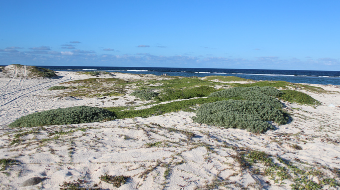 boca grandi beach in aruba