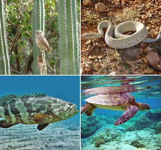 recent-aruba-news-updates